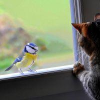 Apa maksudnya jika burung memukul tingkap. Tanda: burung memukul ...